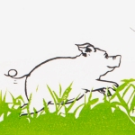 baby pig 4 website